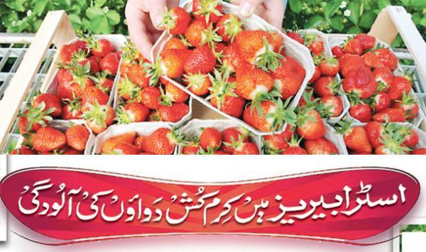 Strawberry Main Cream Kash