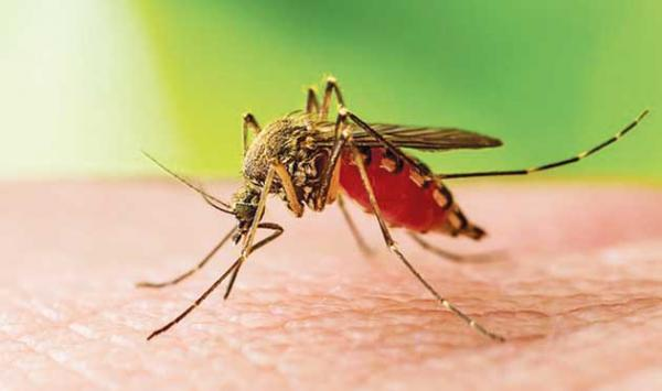 Various Diseases Spread By Mosquitoes