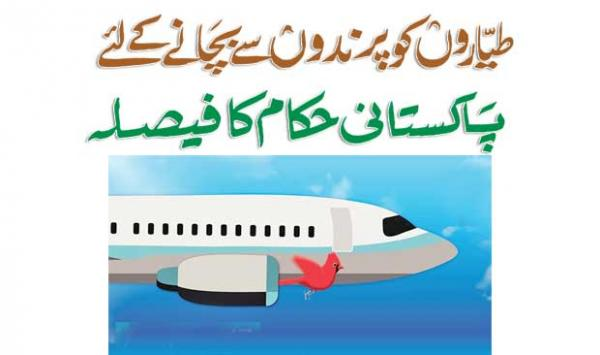 Pakistani Authorities Decide To Protect Aircraft From Birds