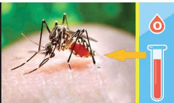 Favorite Blood Group Of Mosquitoes