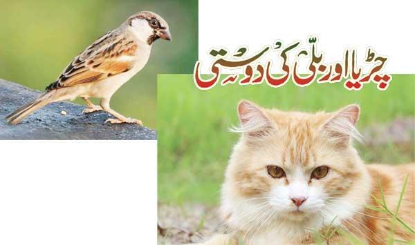 Bird And Cat Friendship