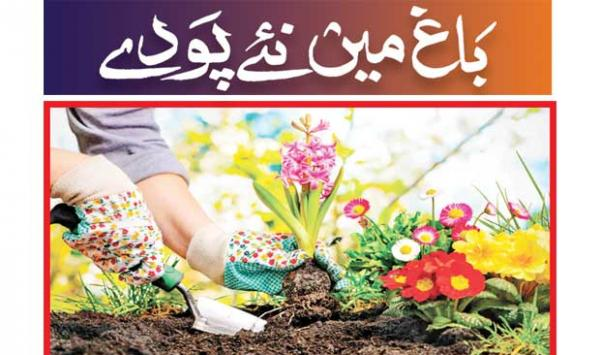 New Plants In The Garden