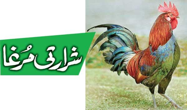 Naughty Rooster