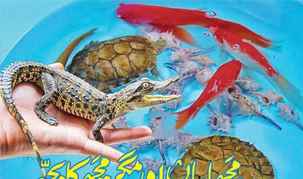 Fish And Baby Crocodiles