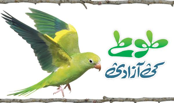 Parrot Freedom