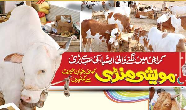 Karachis Asias Largest Cattle Market Is Nothing Short Of Amazing