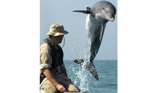 The British Navy Has Been Accused Of Deafening Whales And Dolphins