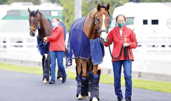 How Will The 247 Horses Get From Belgium To The Tokyo Olympics