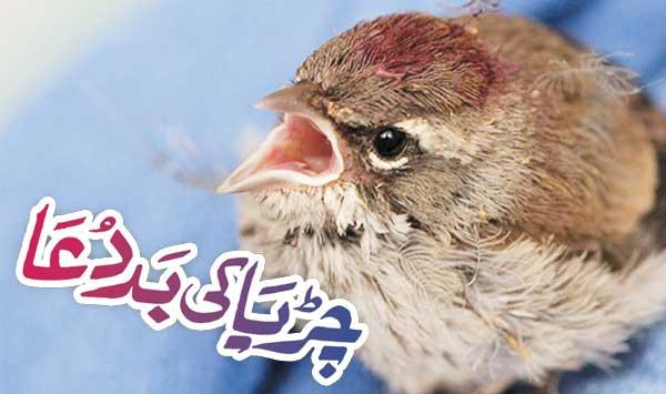 Cursing The Bird