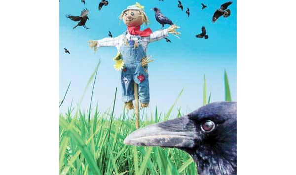 Farmer And Mischievous Crow